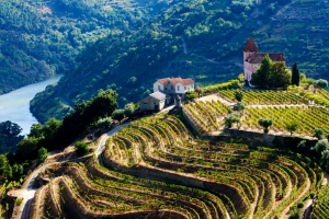 Douro_Vineyards_full